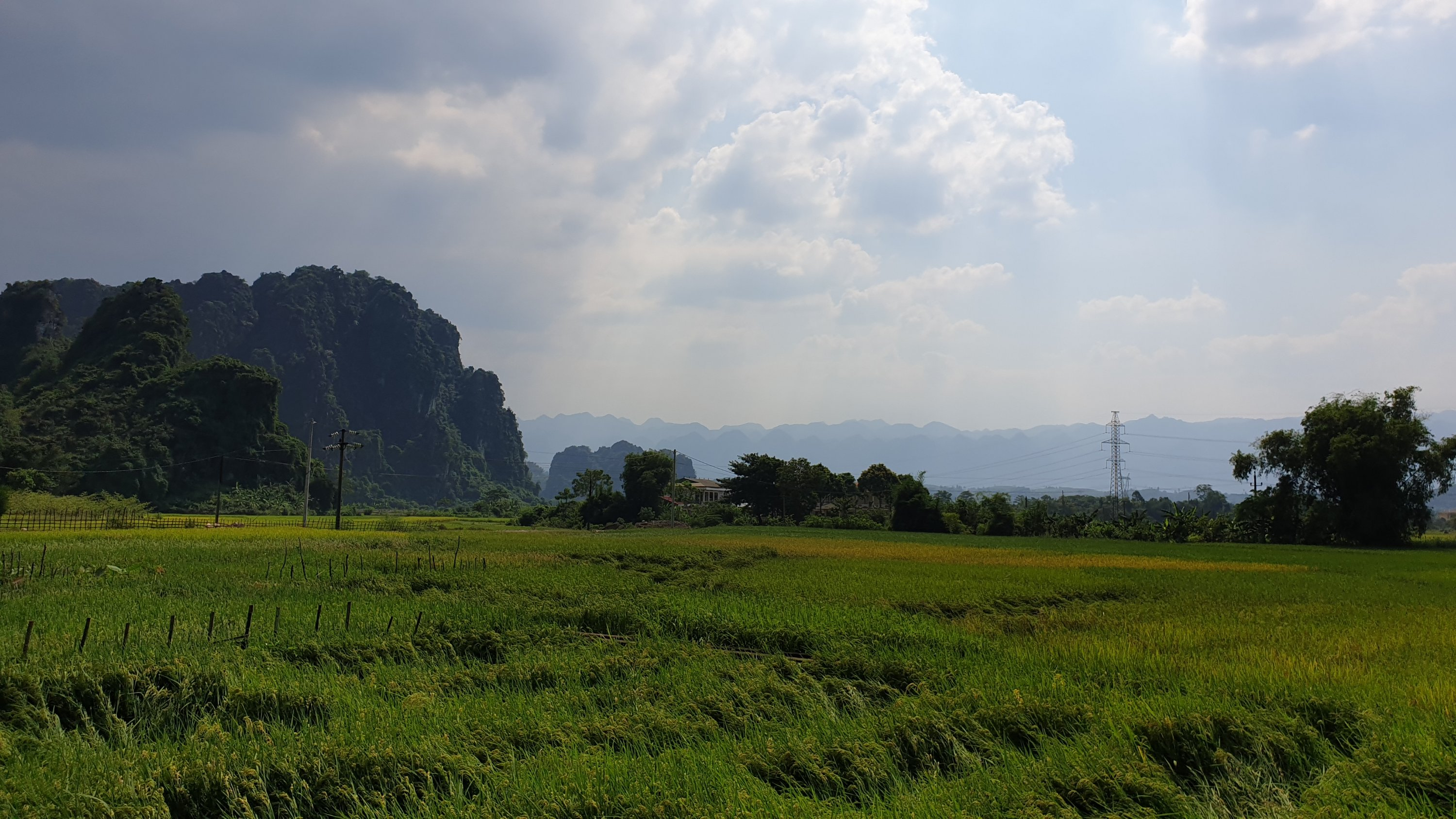 View of limestone monolith and fields of rice en route to Mai Chau