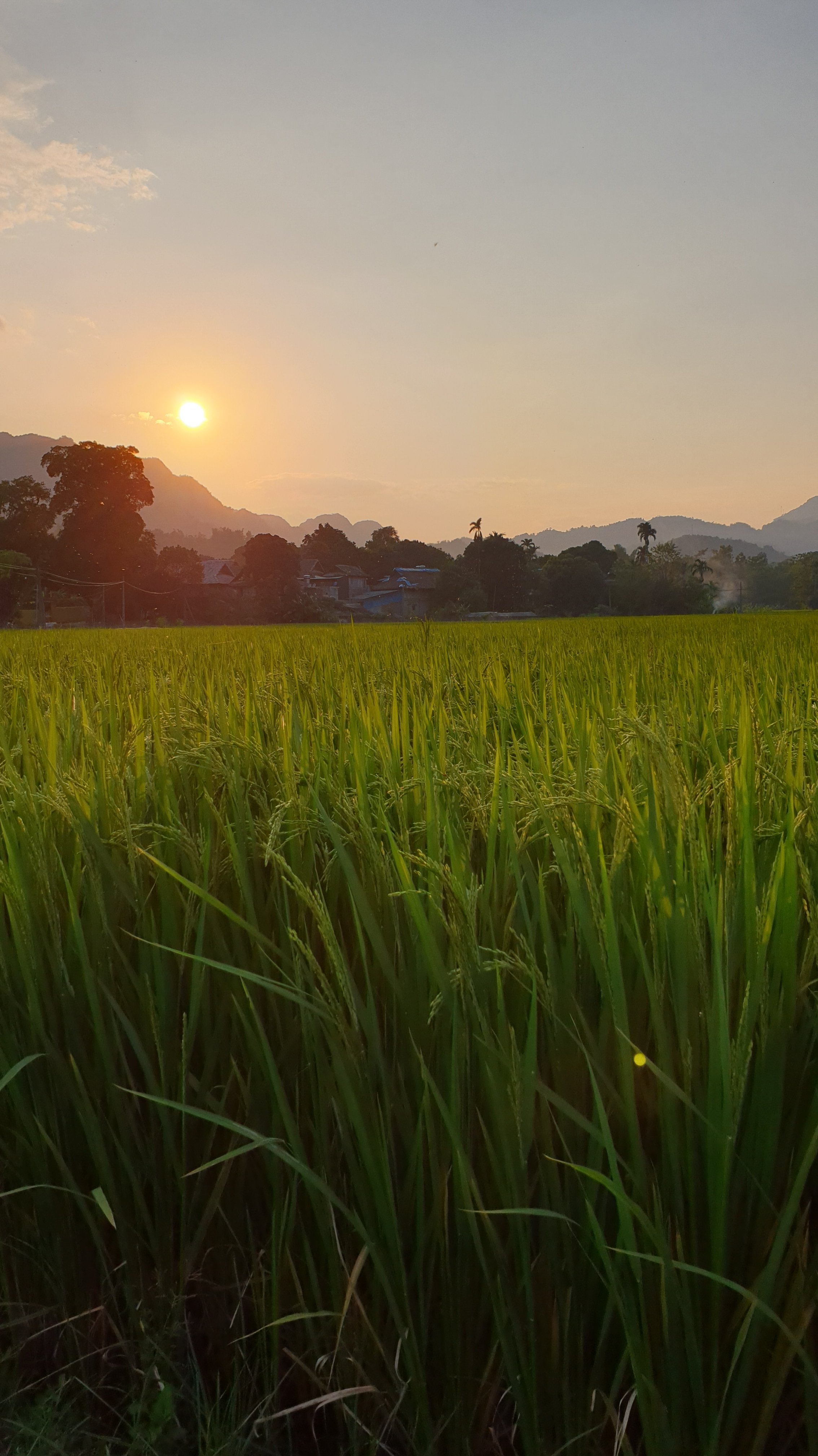View of sun setting over rice field in Mai Chau