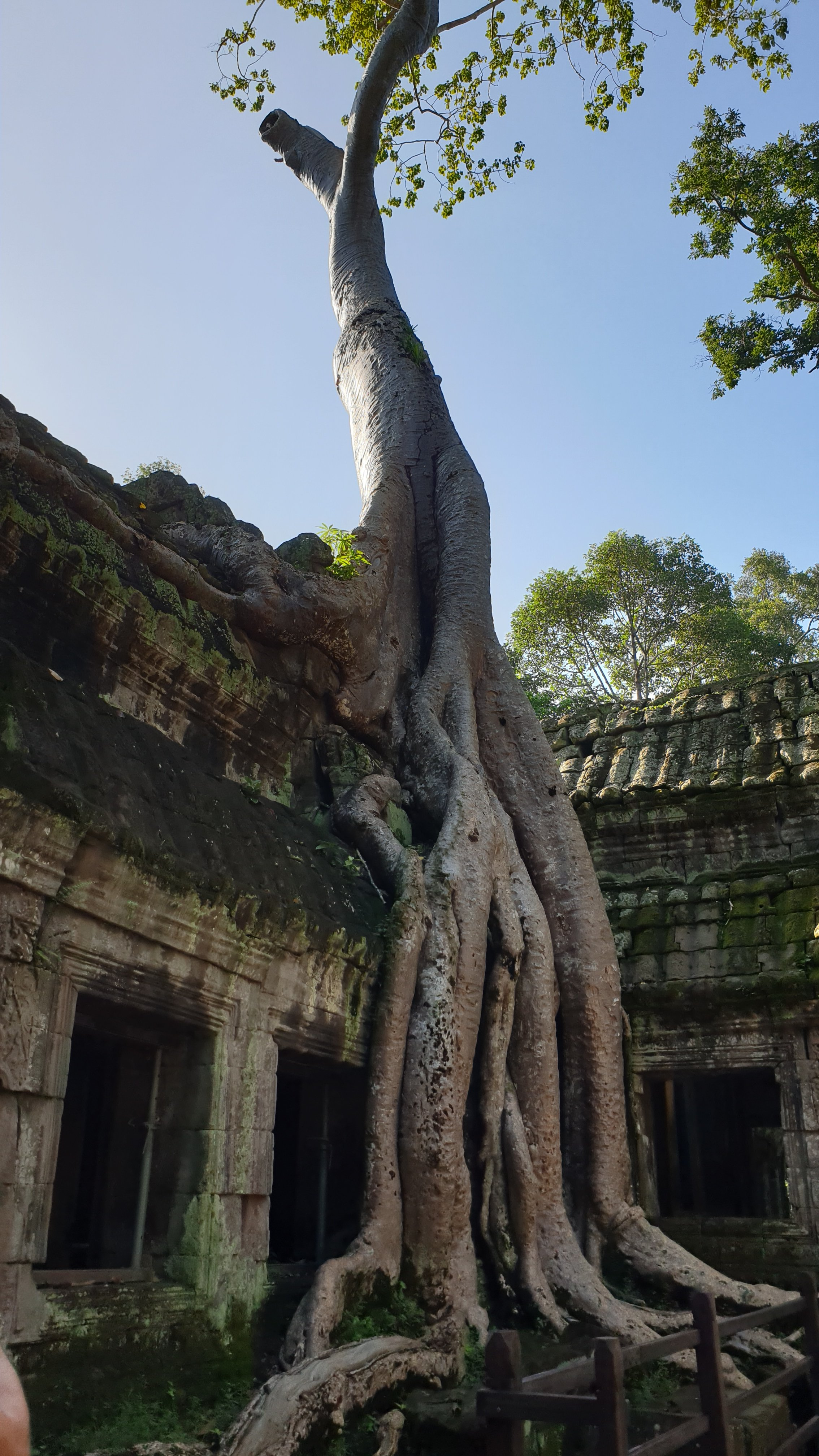 Tree growing on a temple