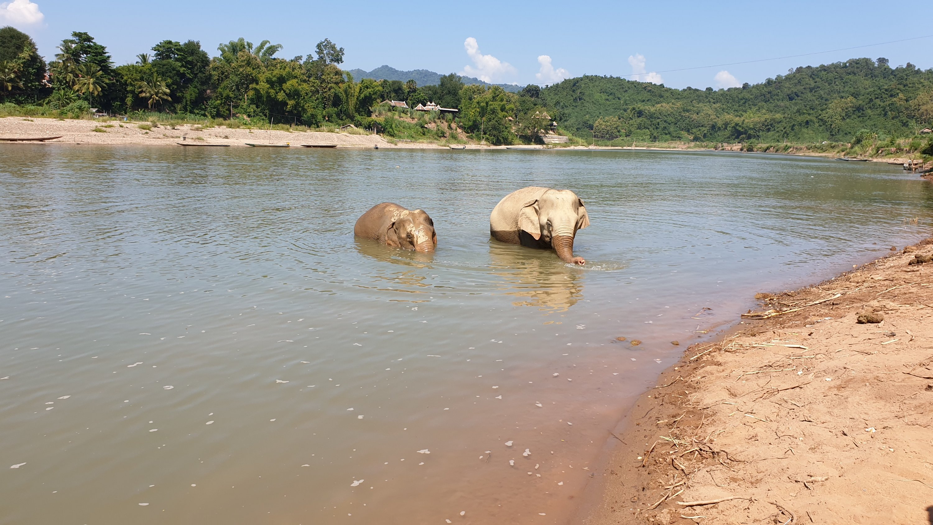 Elephants bathing in the Mekong River
