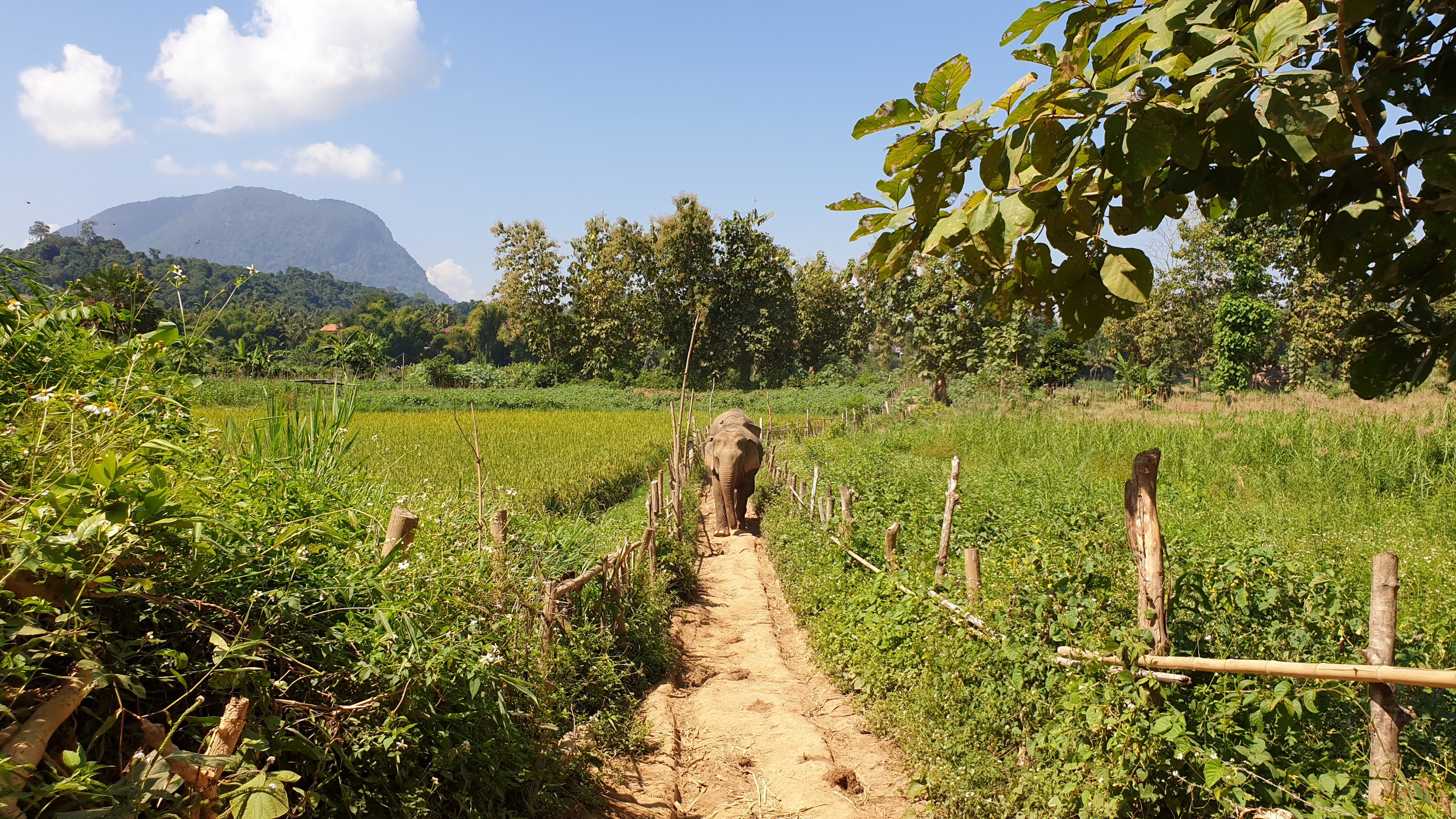 Elephants walking in Mandalao Elephant Sancturary with mountain in the background