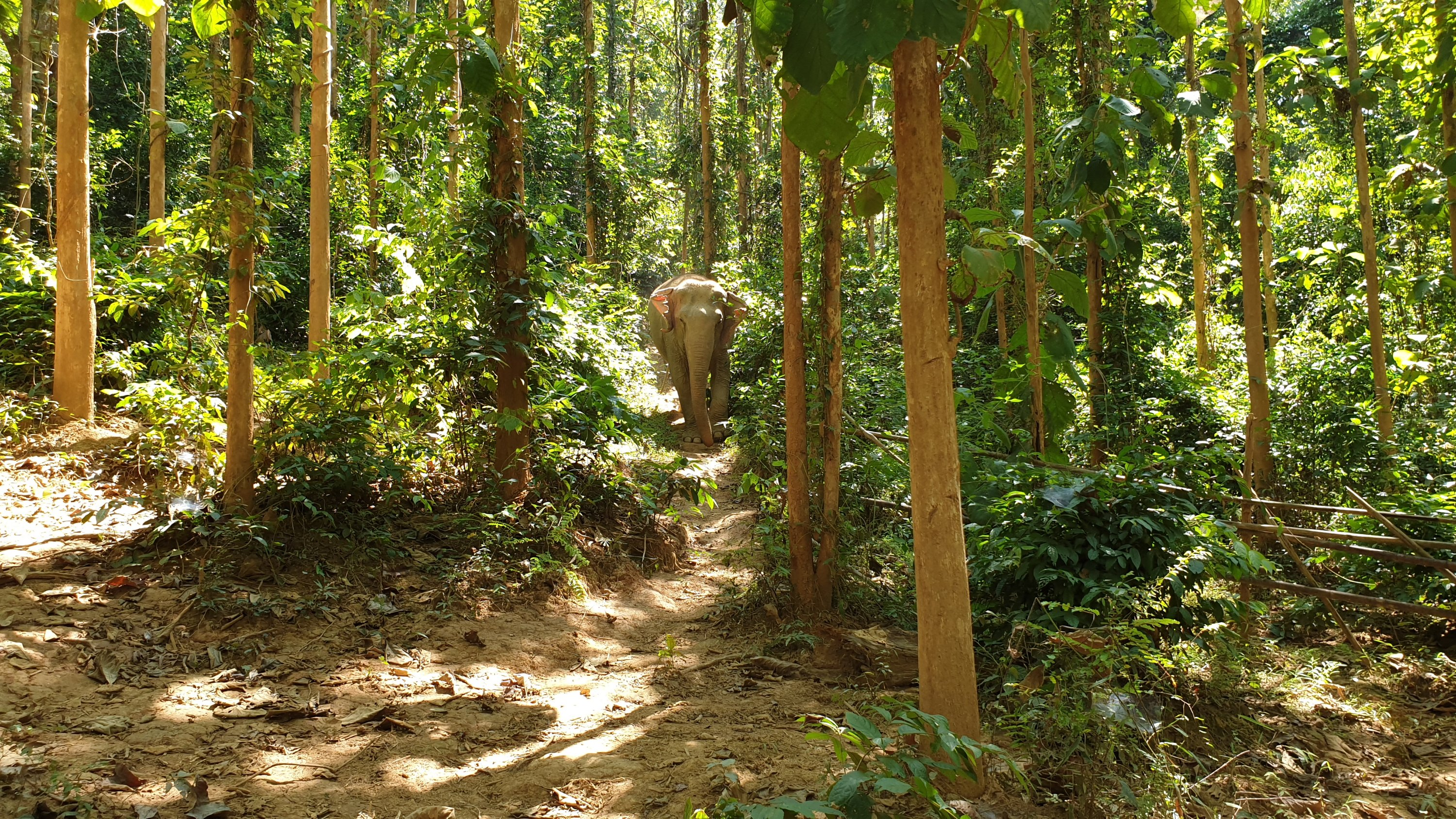 Elephant in the jungle at Mandalao Elephant Sanctuary